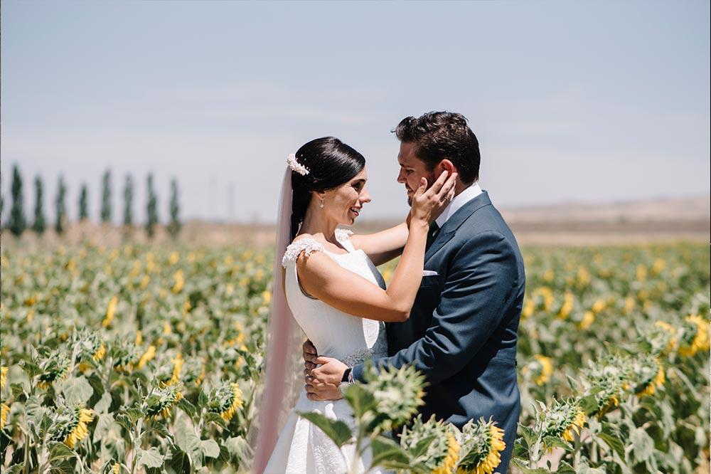 novios fotos boda-girasoles-amarillo-Segovia17