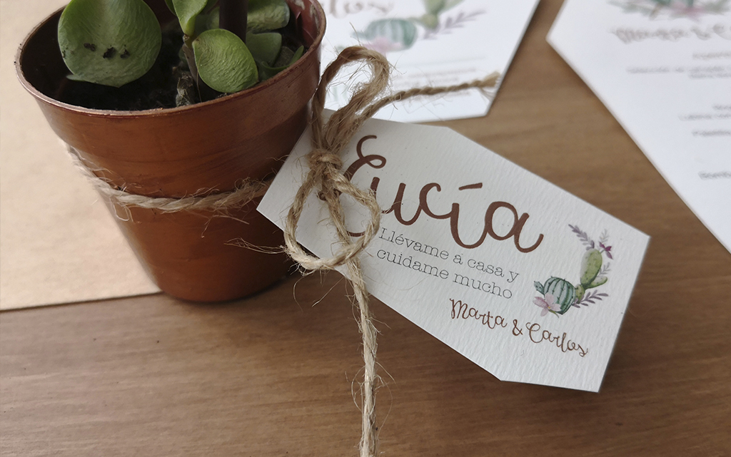 Detalle planta cactus o crasas diseño boda cactus